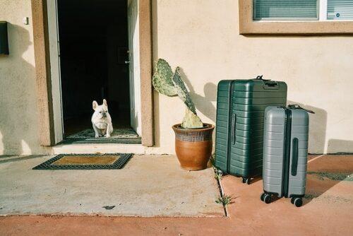 玄関に置かれたスーツケースと犬