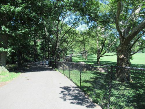 新緑の季節のセントラルパークの歩道