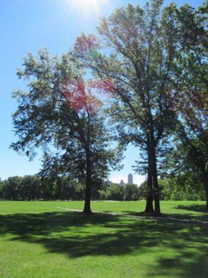 新緑の季節のセントラルパーク、シープメドウ