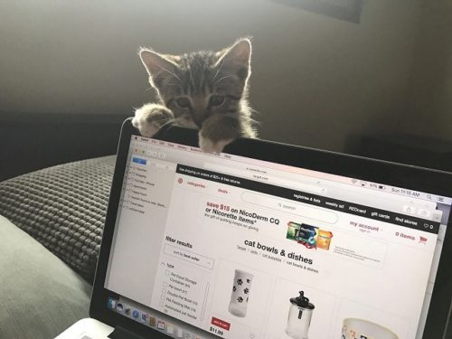 ノートパソコンにしがみつく子猫