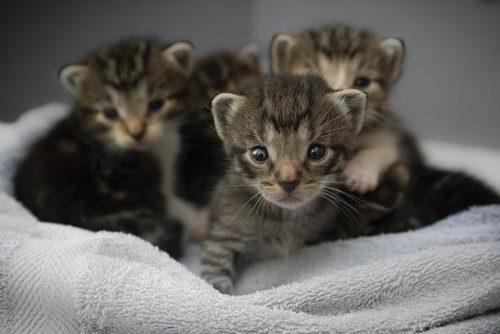 タオルの上にいる子猫たち
