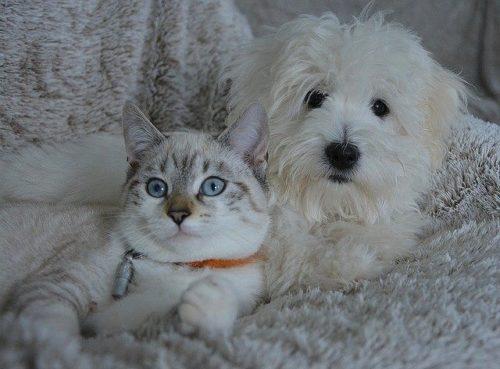 キョトン顔をした猫と犬
